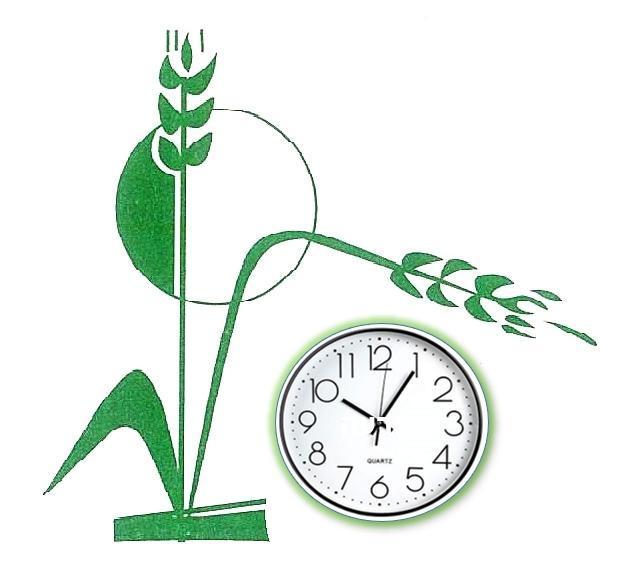 שעות צריכת חשמל (תעו``ז)